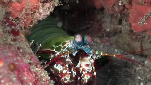 Watch this GIF on Gfycat. Discover more NatureGifs, damnthatsinteresting GIFs on Gfycat