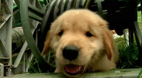 emergency puppy.gif GIFs