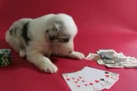 Watch and share Funny Puppy GIFs and Cards GIFs by LadiesFashionBiz on Gfycat