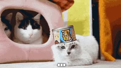 Watch this cat GIF by The GIF Forge (@leahstark) on Gfycat. Discover more related GIFs on Gfycat