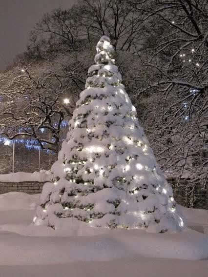 Watch and share Sapin De Noel Enneige, Neige, Hiver GIFs on Gfycat