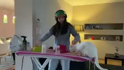 DJ and cat