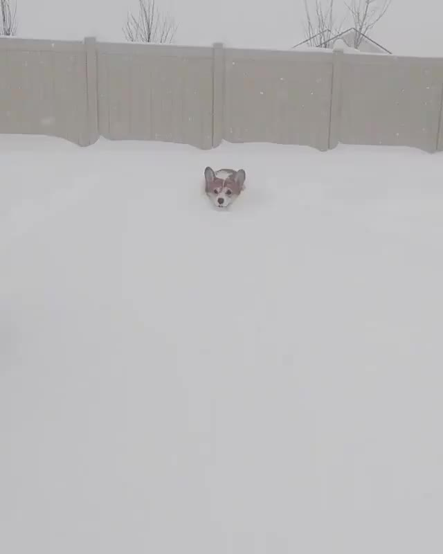 Watch and share Winter GIFs and Snow GIFs on Gfycat