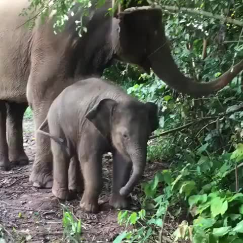 Watch Baby elephant learning to use his trunk (reddit) GIF by FarSizzle (@farsizzle) on Gfycat. Discover more related GIFs on Gfycat