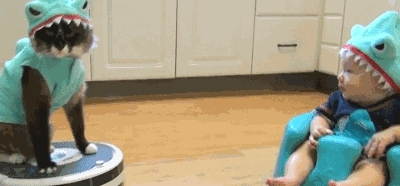 catsridingroombas, girlsmirin, Toddler in a shark outfit admiring a cat in a shark outfit riding a Roomba (reddit) GIFs