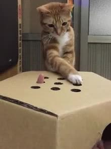 Watch this cat GIF by sannahparker on Gfycat. Discover more adorable, cat, cute, whac a mole, whack a mole GIFs on Gfycat