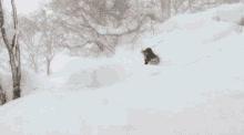 Powder Skiing GIFs