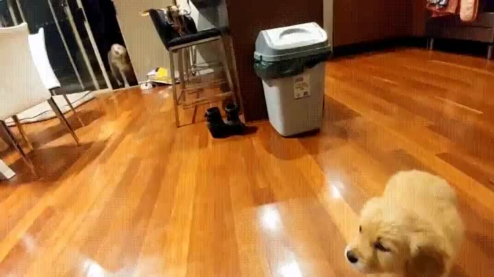 -You bought me a puppy-! Oh boy!- - tippytaps GIFs