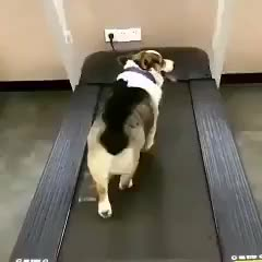 Watch this dog GIF by Mohamed Wasfi (@mwasfi) on Gfycat. Discover more compilation, dog, dogs, funniest, funny animal video, funny animal videos, funny animals, funny dog, funny dogs, funny dogs compilation, funny video, funny videos, funny videos 2016, impossible, impossible challenge, laugh, laughing, puppies, puppy, try not to laugh GIFs on Gfycat