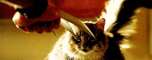 Watch this wolverine GIF on Gfycat. Discover more james howlett, logan, mutant, weapon x, wolverine, x-men GIFs on Gfycat