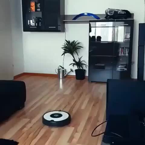Watch Initial D Roomba GIF on Gfycat. Discover more related GIFs on Gfycat