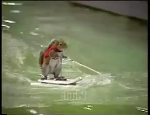 squirrel run