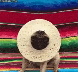 Watch and share Tortillas GIFs and Animales GIFs on Gfycat