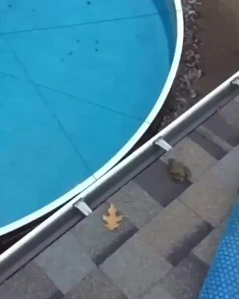 fail, frog, Frog Jump Fail GIFs