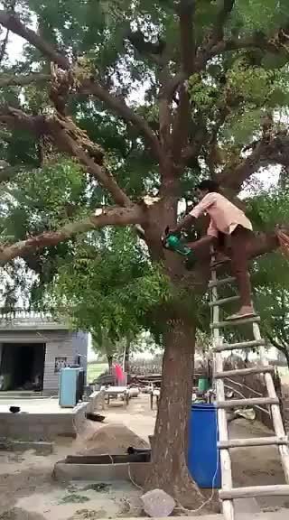 Watch and share Cutting A Tree Branch GIFs by EngineerScientist on Gfycat