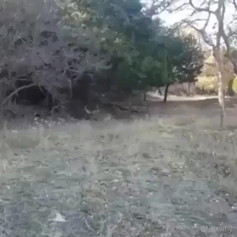 funny, hunting, deer, Deer season GIFs