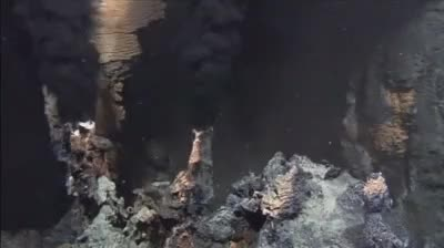 Watch and share Hydrotermal Vents GIFs and Marine Biology GIFs on Gfycat