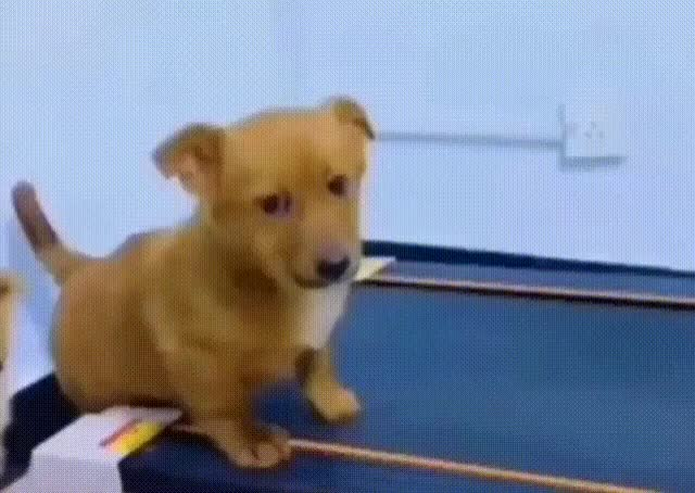 Watch and share Treadmill GIFs and Dog GIFs by Johnny Depth on Gfycat