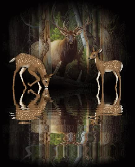 "Watch and share ""animated-deer-image-0002"" GIFs on Gfycat"