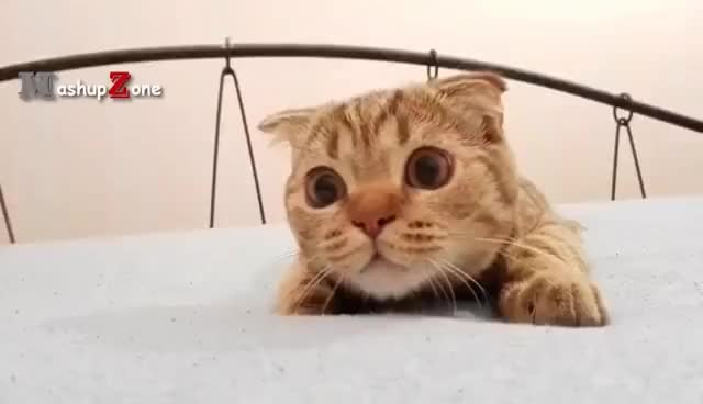 Image of: Laugh Watch Top 10 Funny Cat Videos Funny Cats 2017 Gif On Gfycat Discover More Gfycat Top 10 Funny Cat Videos Funny Cats 2017 Gif Find Make Share