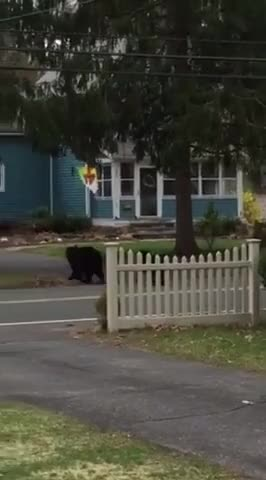 Watch and share Bears GIFs and Aww GIFs on Gfycat