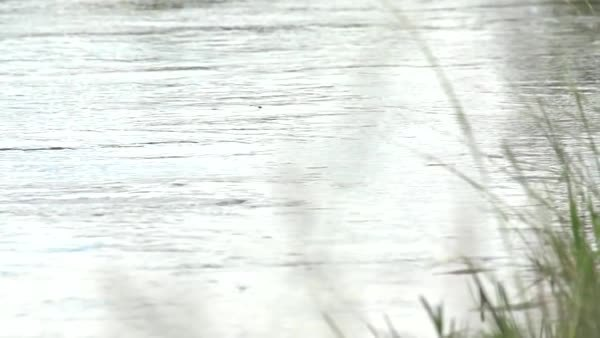 NatureIsFuckingLit, flyfishing, Trout leaps for damselfly (gif) (reddit) GIFs