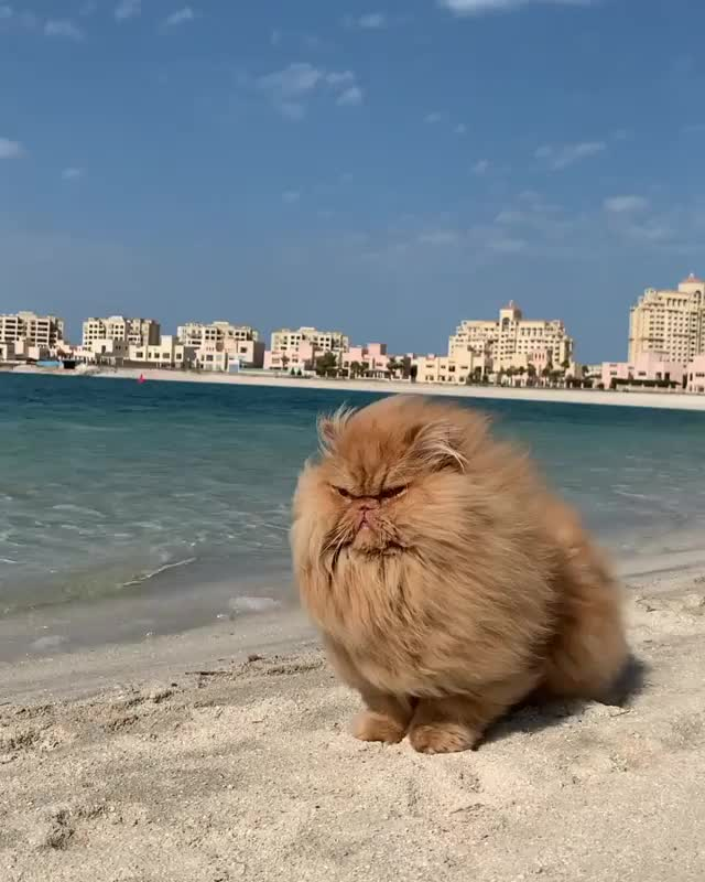 Watch and share Beach GIFs and Cat GIFs by vani  on Gfycat