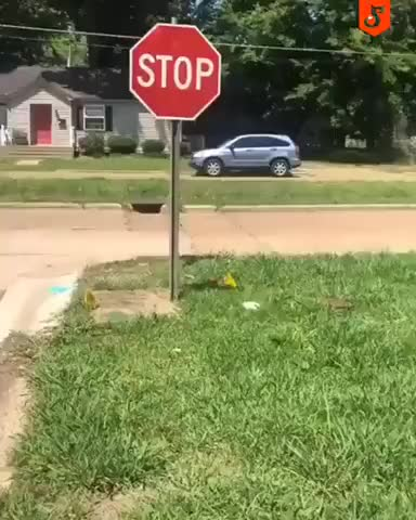 Stop Stop - gif