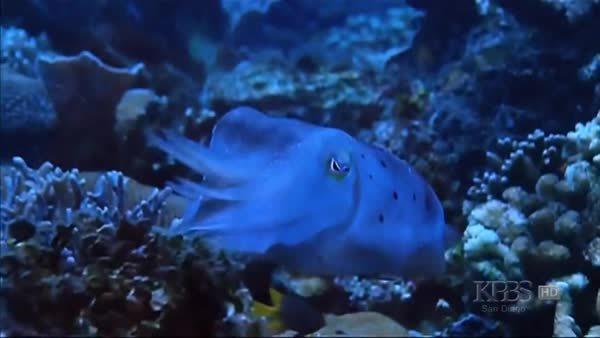 naturegifs, Cuttlefish changing skin pattern (reddit) GIFs