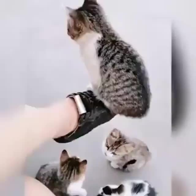 Watch and share Kittens GIFs and Kitten GIFs by Jill Valentine on Gfycat