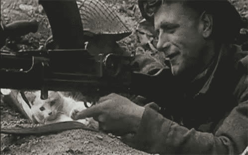 war, gun, kitten, cat, cute GIFs