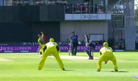 Watch and share England Captain Eoin Morgan Struck By Mitchell Starc Bouncer GIFs on Gfycat