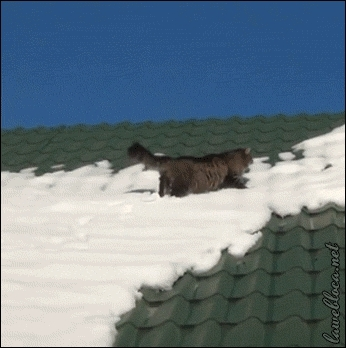 nononono, Cat sliding off a snowy roof (reddit) GIFs