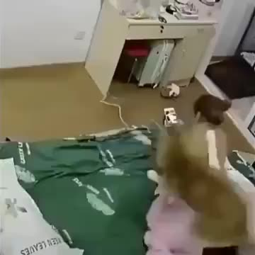Watch and share Hey Hooman Look This GIFs by Gif-vif.com on Gfycat