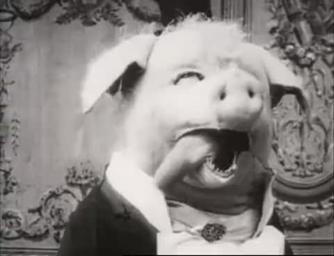 Watch this pig GIF on Gfycat. Discover more pig, pigs, terror GIFs on Gfycat