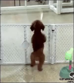 Watch and share Keep Your Pets Safe And Secure With A Baby Gate! GIFs on Gfycat
