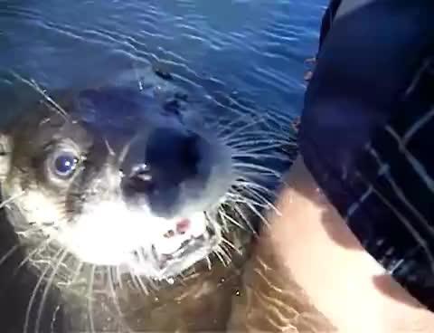 otter, LOVE ME GIFs