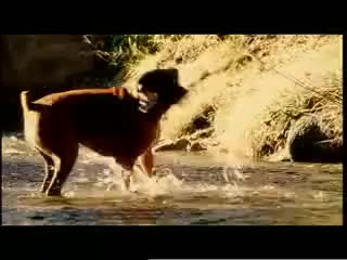 Watch puro love GIF on Gfycat. Discover more cachorro, comercial, commercial, dogs, pedigree, perros GIFs on Gfycat