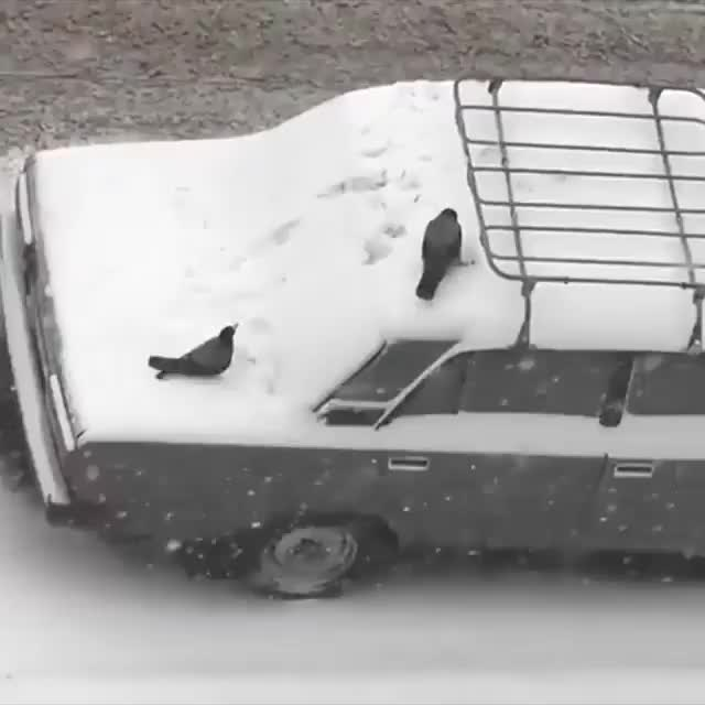 Watch and share Crows Playing In The Snow GIFs by iblizzard on Gfycat