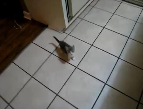 cat, kitten, kittens, kitty, meow, meowwww, Cute Kitten GIFs