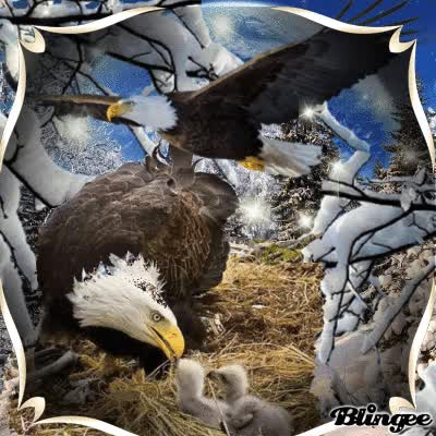 Watch and share Eagle Nest GIFs on Gfycat