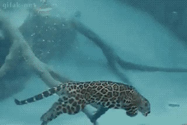 Watch and share Swimming GIFs and Swimmer GIFs on Gfycat