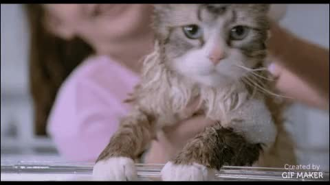 Watch Nine Lives GIF by @familymovies on Gfycat. Discover more aww, awwgifs, movies GIFs on Gfycat