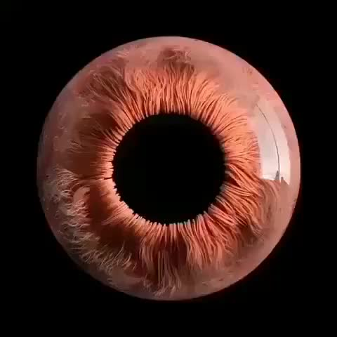 Watch and share This Is A Human Eye Under Microscope. GIFs by saleh on Gfycat