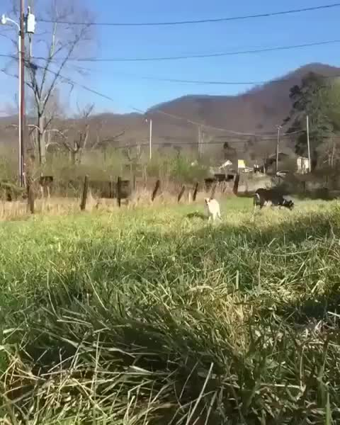 Watch and share Cute GIFs and Goat GIFs by jakunai on Gfycat