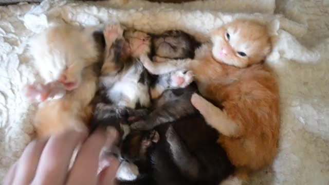 Watch and share Kittens GIFs by Fomicheva1979 on Gfycat