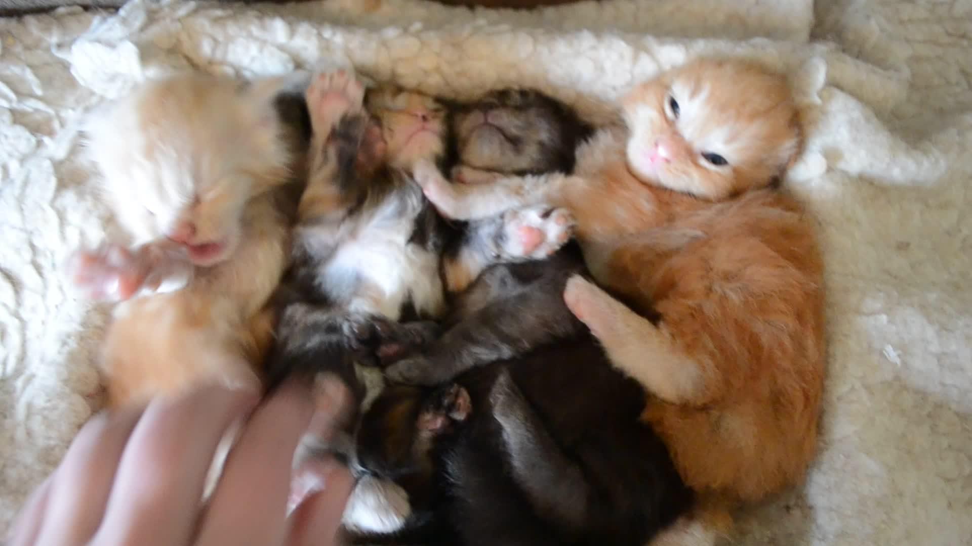 cute   kittens, kittens, Cute kittens GIFs