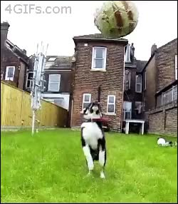 Watch and share Puppy Fails In Catching Ball GIFs on Gfycat
