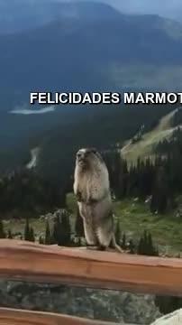 Watch and share FELICIDADES MARMOTA GIFs by jonnygif on Gfycat