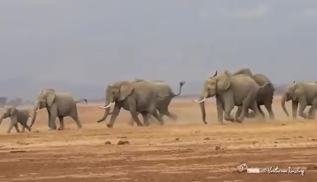 Watch Elephant Run GIF on Gfycat. Discover more related GIFs on Gfycat